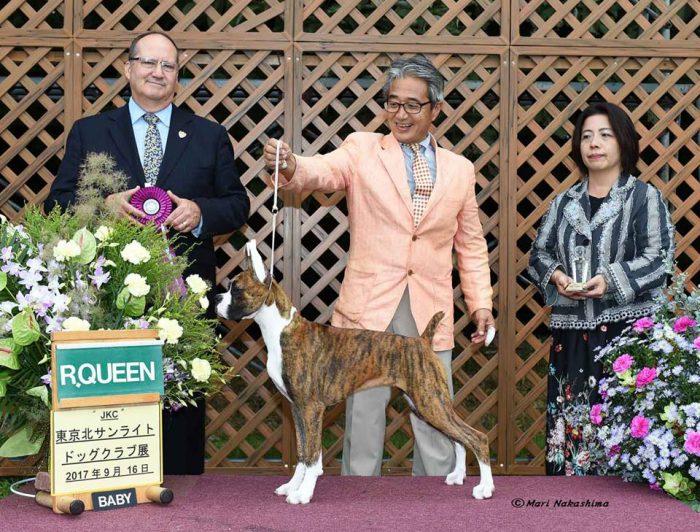 2017年9月16日 東京北サンライトドッグクラブ展ベビーR・クイーン受賞 おめでとうございました